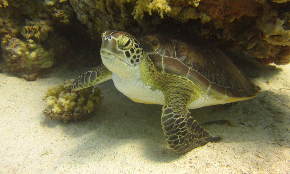 visual_turtle